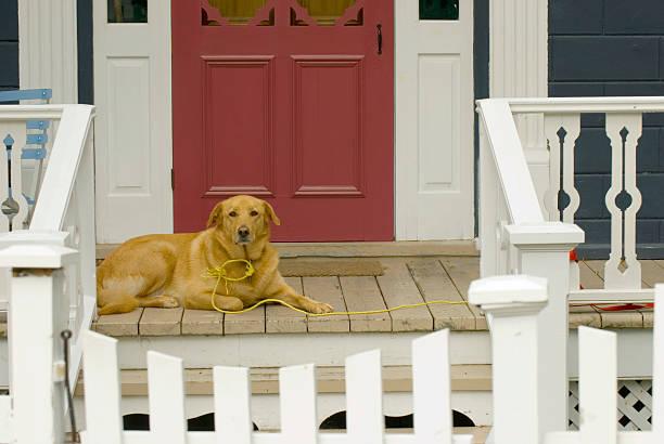 Big Dog on the Porch stock photo