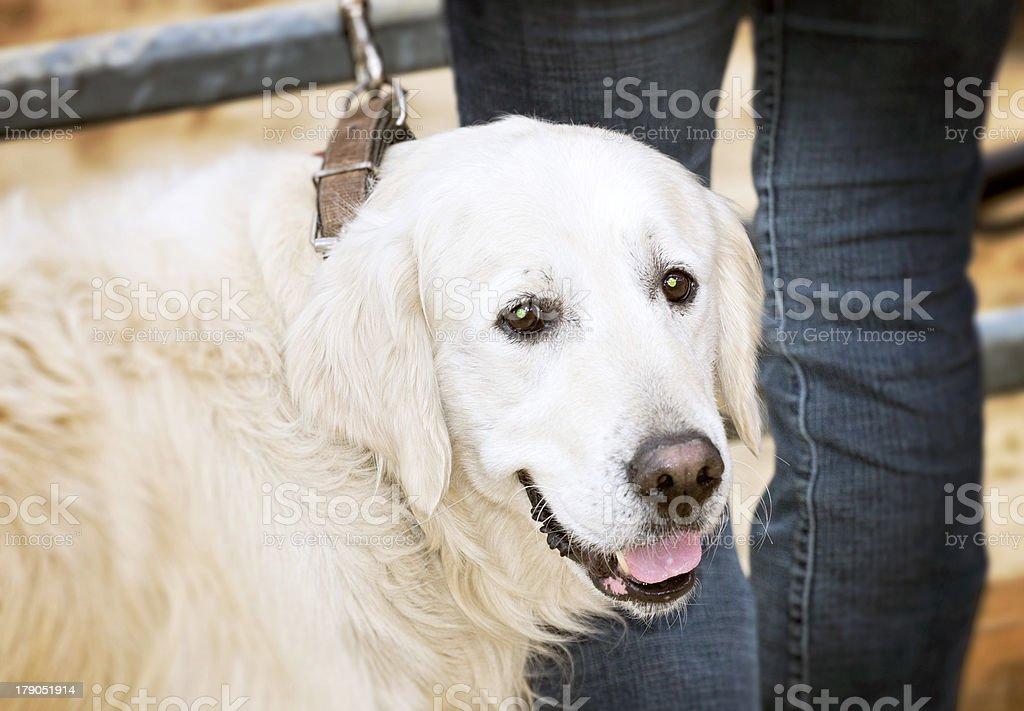 Big dog royalty-free stock photo