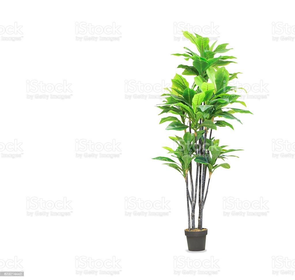 Big dracaena palm w garnku, izolowanych ponad biały – zdjęcie