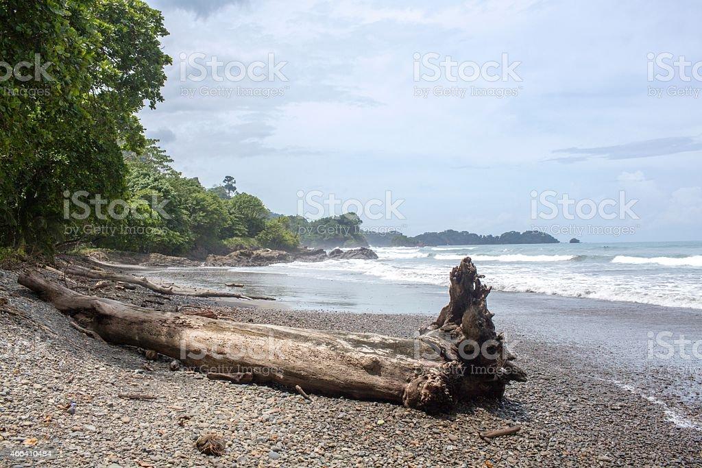 Big Driftwood along a Costa Rica Beach stock photo