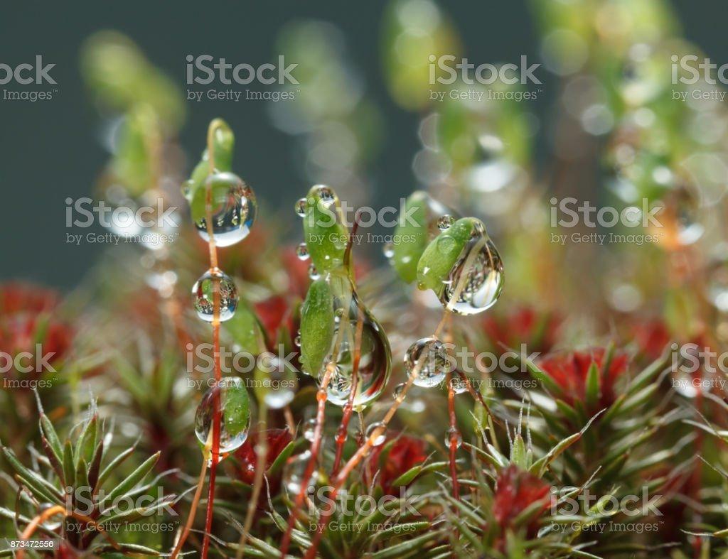 Big drops on moss stock photo