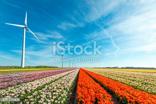 Row of windmills. in the foreground fields of orange, yellow, purple and white tulips near Schragen, the Netherlands. GPS tagged.