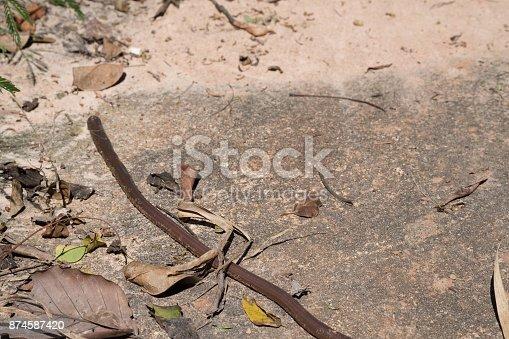 Big earthworm on the floor