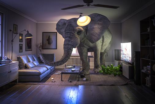 big elephant inside a living room with nobody inside.