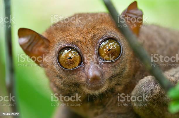 Big eyes picture id504695022?b=1&k=6&m=504695022&s=612x612&h=wqfo3dm hjooliyc337o7rlspln7fpkwzzzk6o1z5xs=