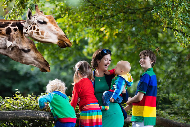 Big family, mother and kids feeding giraffe at the zoo stock photo