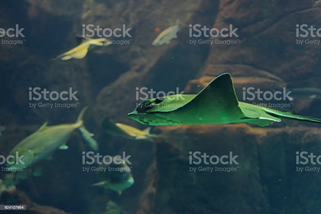 Big Fish aquarium stock photo