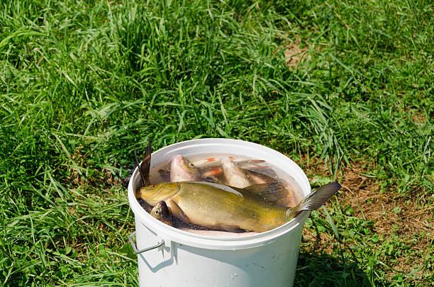 Mga resulta ng larawan para sa bucket full of fish FISHING