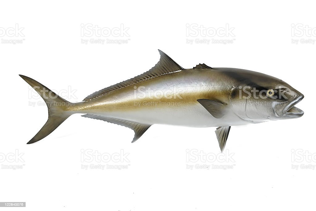 big fish royalty-free stock photo