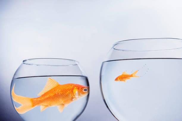 큰 물고기 작은 물고기 - 작은 뉴스 사진 이미지