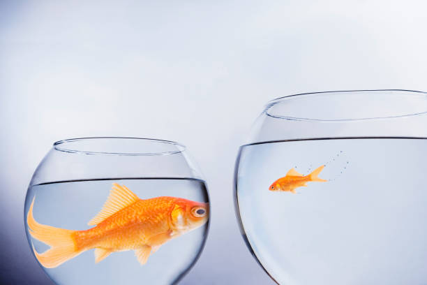 Big fish small fish Big fish small fish small stock pictures, royalty-free photos & images