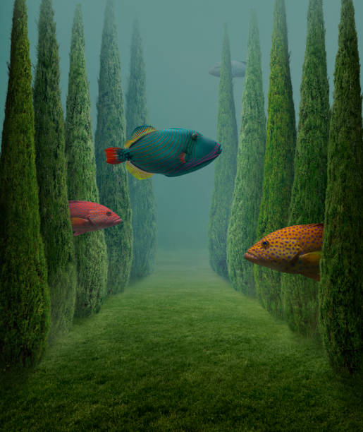 Big fishes This is a photo compilation surreal stock pictures, royalty-free photos & images