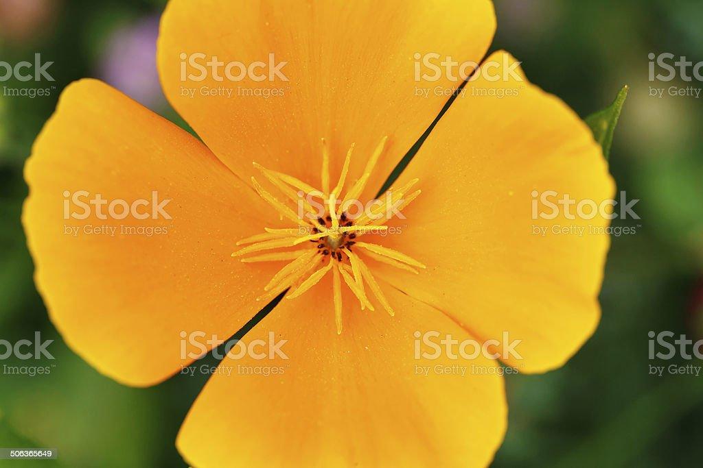 Big flower macro royalty-free stock photo