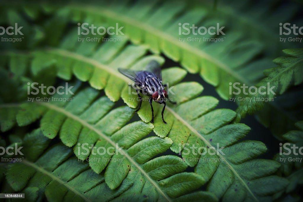big fly on green fern macro effect stock photo