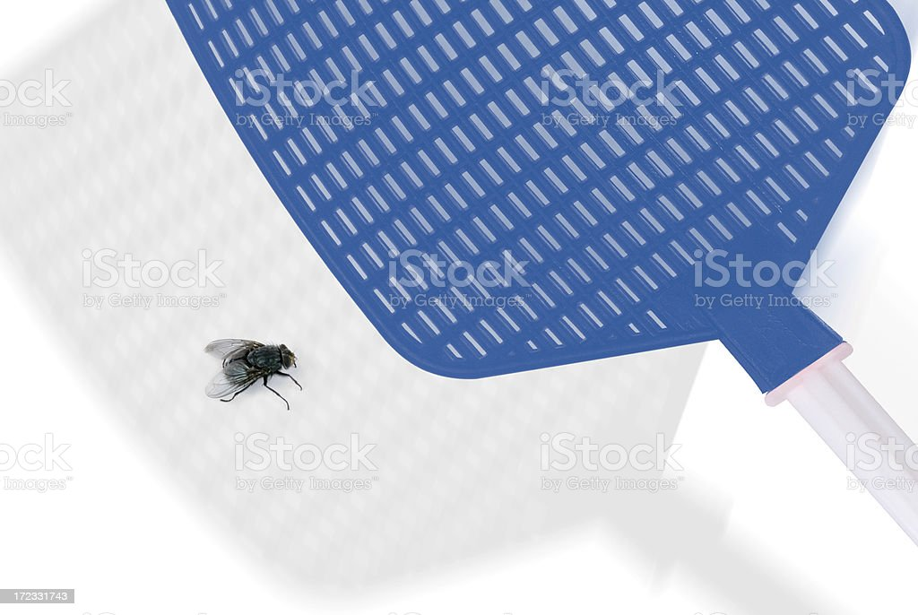 Big Fly royalty-free stock photo