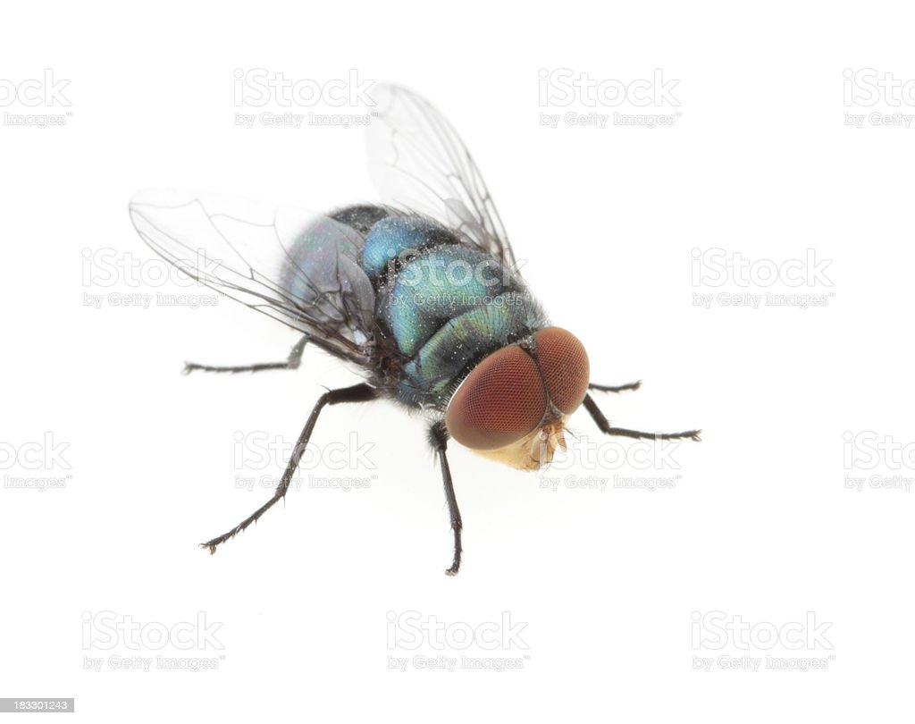 Big fly stock photo