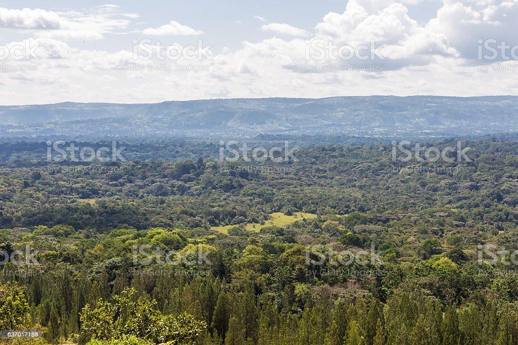 Big forest in Kenya. Kakamega, Kenya stock photo
