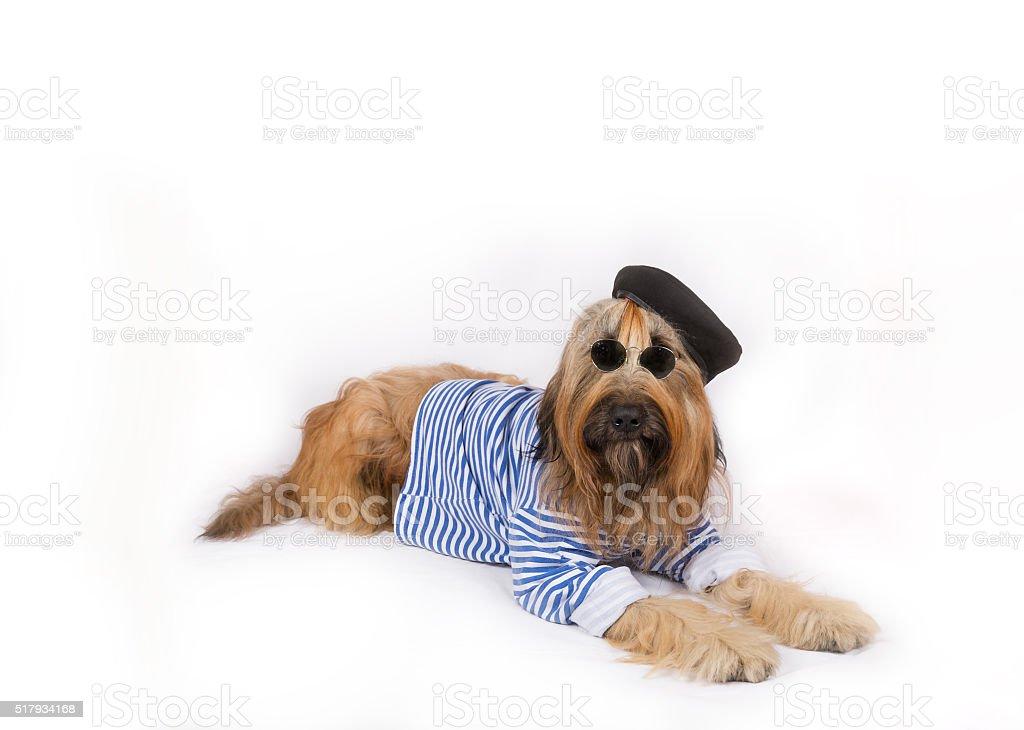 Big French shepherd dog in black beret stock photo
