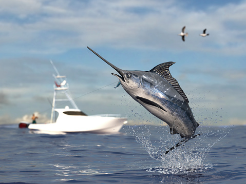istock Big game fishing time, big swordfish marlin  jumped hooked by sport fishing angler, fishing boat 3d render 1066712134