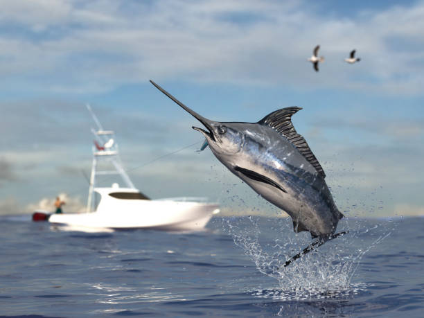 Big game fishing time, big swordfish marlin  jumped hooked by sport fishing angler, fishing boat 3d render Big game fishing time, big swordfish marlin  jumped hooked by sport fishing angler, fishing boat 3d render fishing stock pictures, royalty-free photos & images