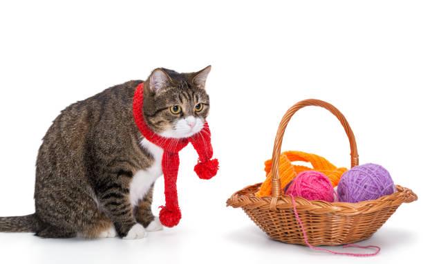 Big gray cat in a red scarf picture id881019578?b=1&k=6&m=881019578&s=612x612&w=0&h=hcd4jcasvnaddfvak1lneokxpb6q5t  rhfmcw7qnyy=