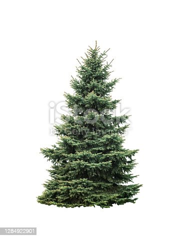 istock Big green fir tree isolated on white background 1284922901