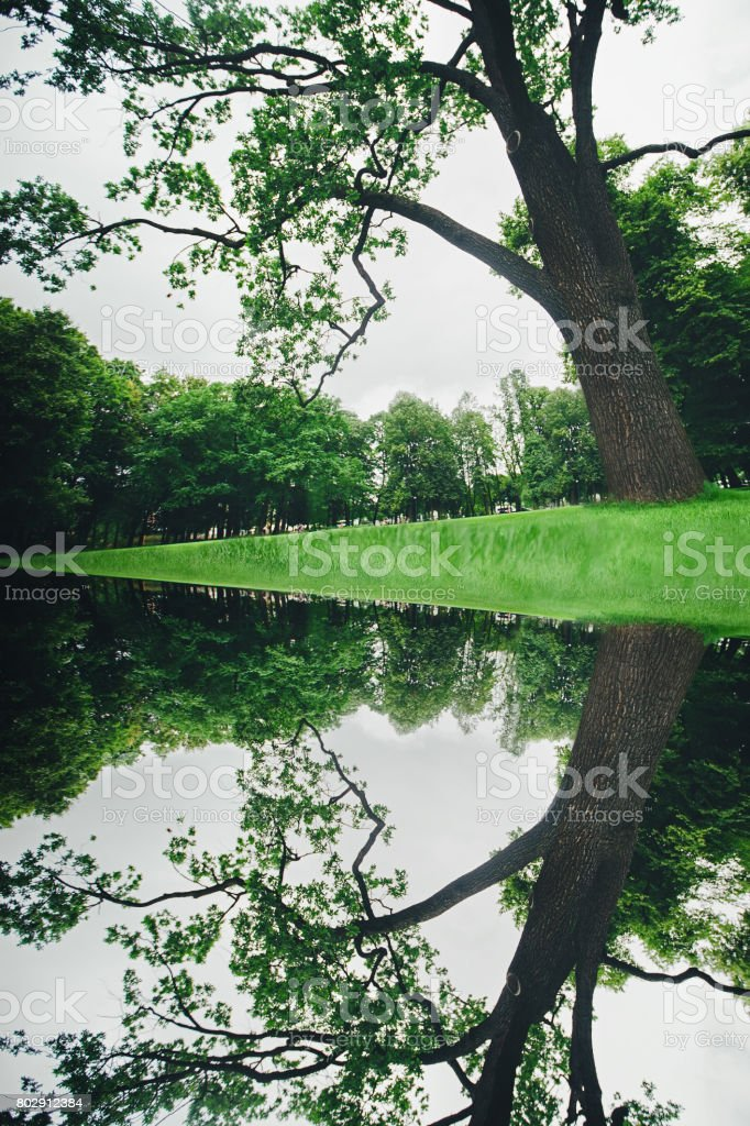 A Big Green Tree is Reflected in Water as in Mirror stock photo