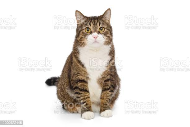 Big grey cat picture id1200922446?b=1&k=6&m=1200922446&s=612x612&h=gouu2 ow965hbrqg01udqeehlsmejz9vf60mgszpf9i=