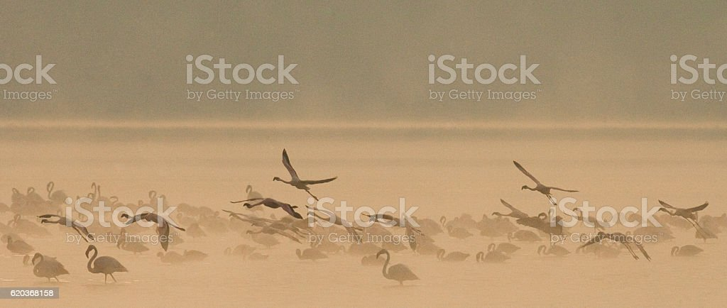 Big group flamingos on the lake. Kenya. foto de stock royalty-free