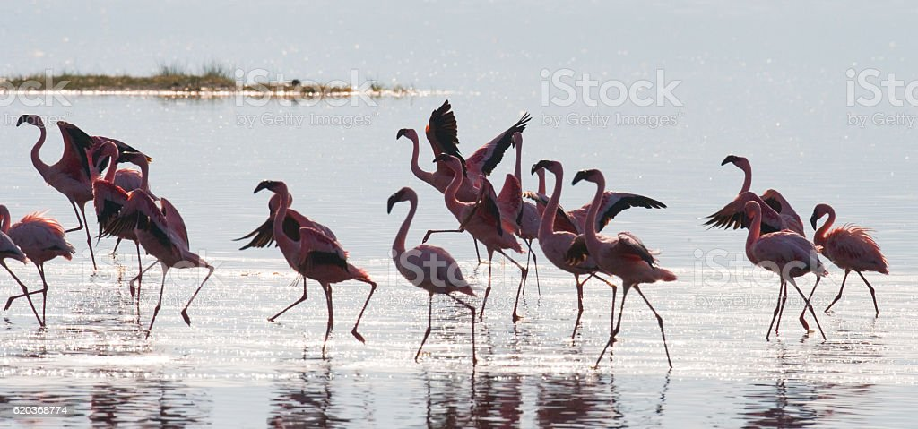 Big group flamingos on the lake. Kenya. foto de stock royalty-free