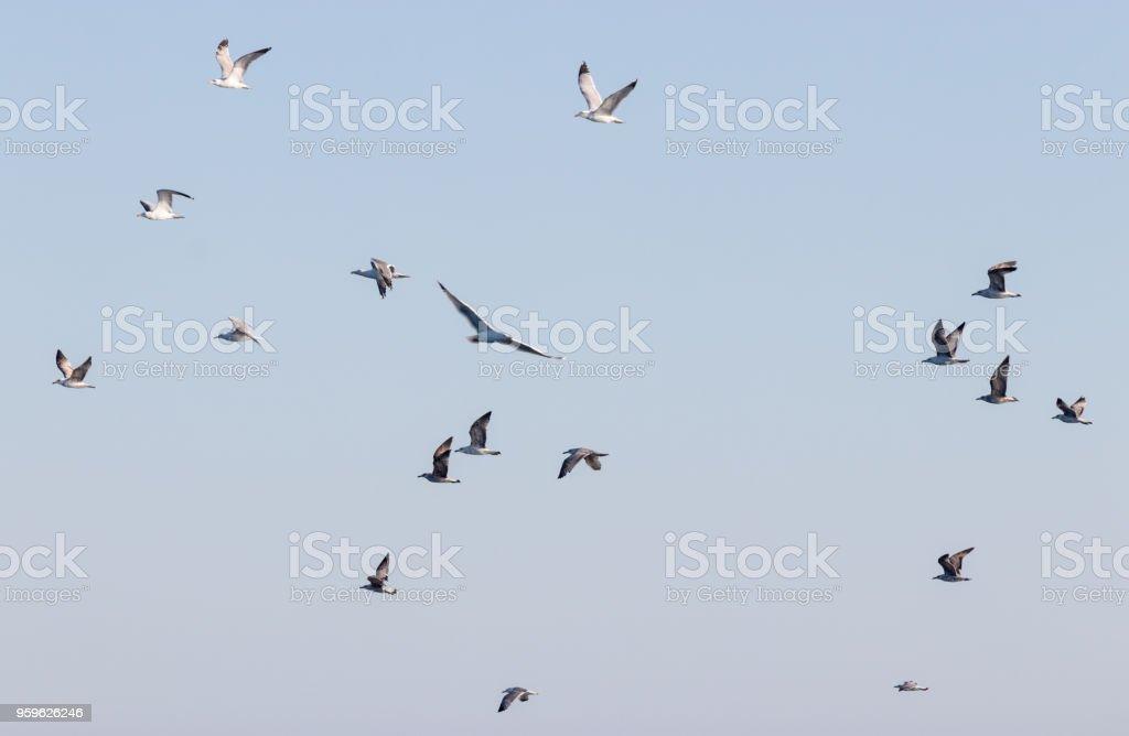 Un gran grupo de aves volando hacia el cielo de noche - Foto de stock de Agua libre de derechos