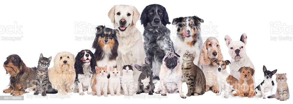 Big group of pets stock photo