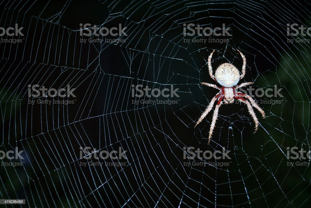 big hairy spider stock photo