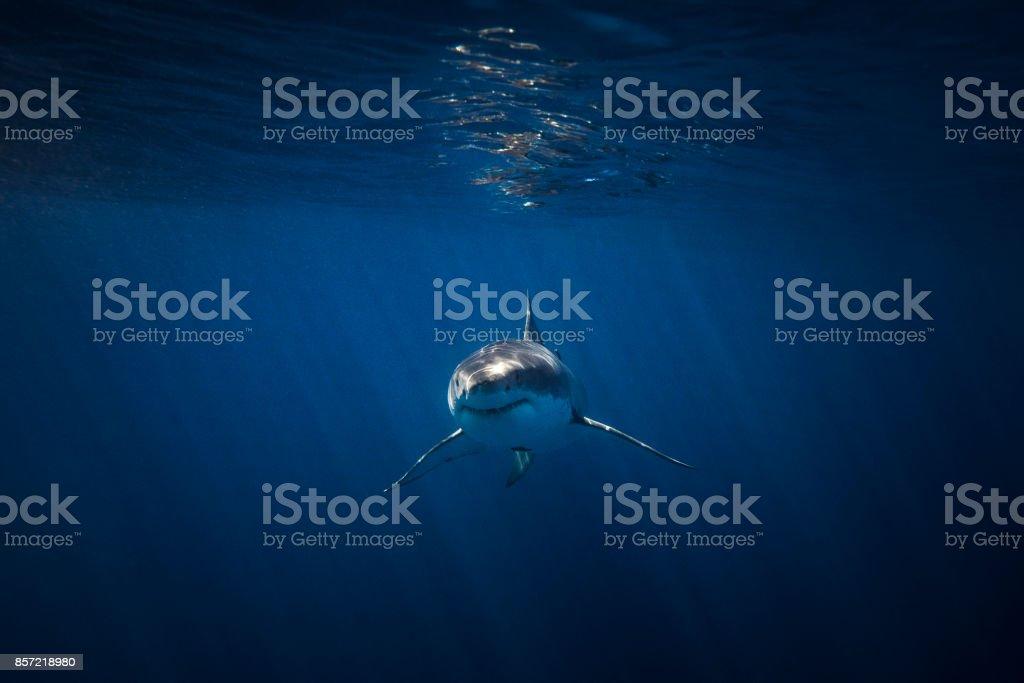 Big happy fish stock photo