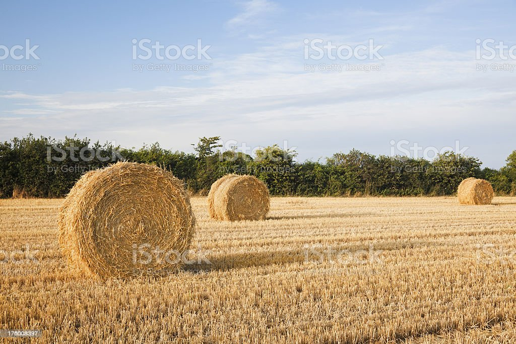 Big Hay Bales in a harvested field. Evening sun. royalty-free stock photo