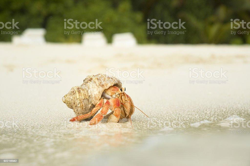 Big Hermit Crab stock photo