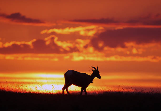 Big horn sheep picture id1077726308?b=1&k=6&m=1077726308&s=612x612&w=0&h=l2keazrzejcesegyx6ofvojzxgqa2giqqi3ey6 6zmm=