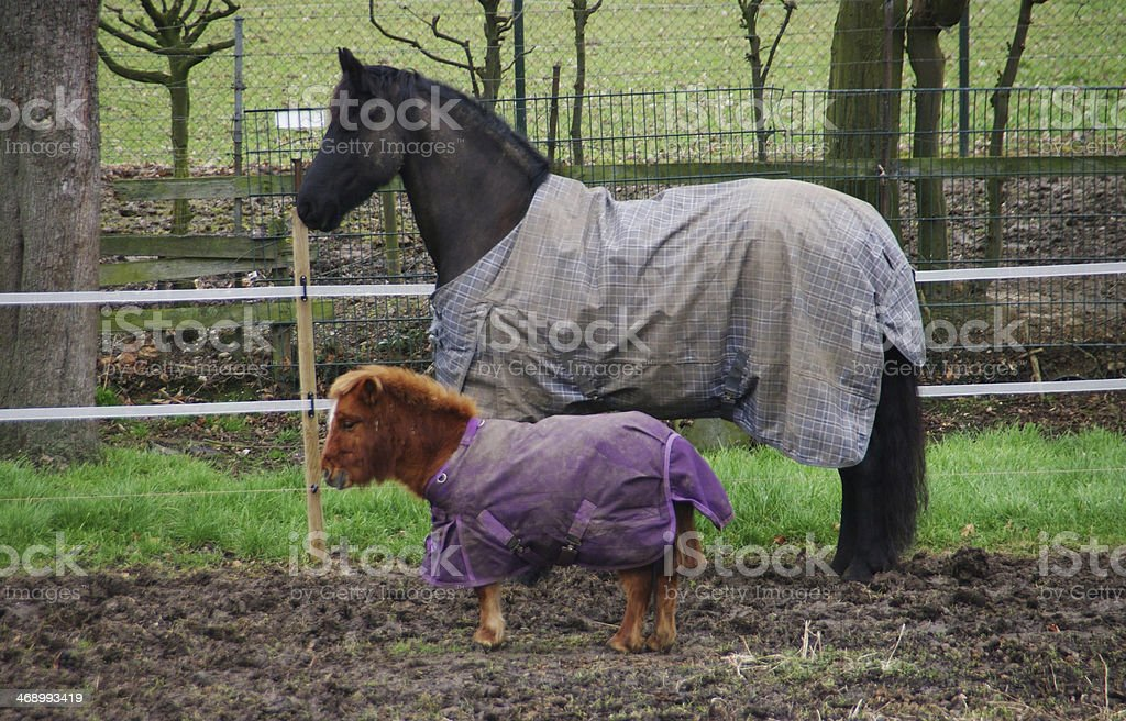 Big horse with little pony stock photo