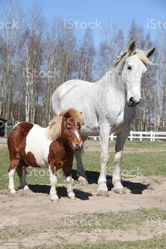 Big horse with pony friend stock photo