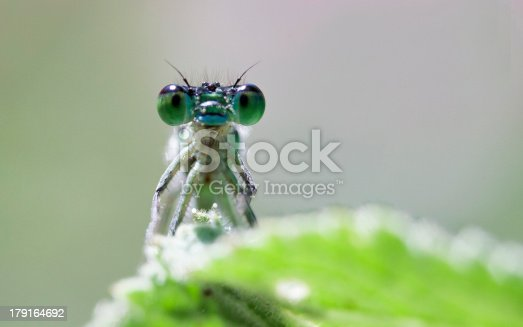 istock Big insect eyes 179164692