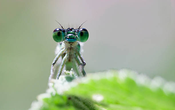 Big insect eyes stock photo