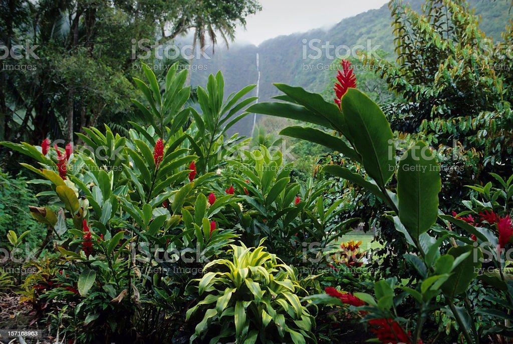 Big Island Hawaii royalty-free stock photo
