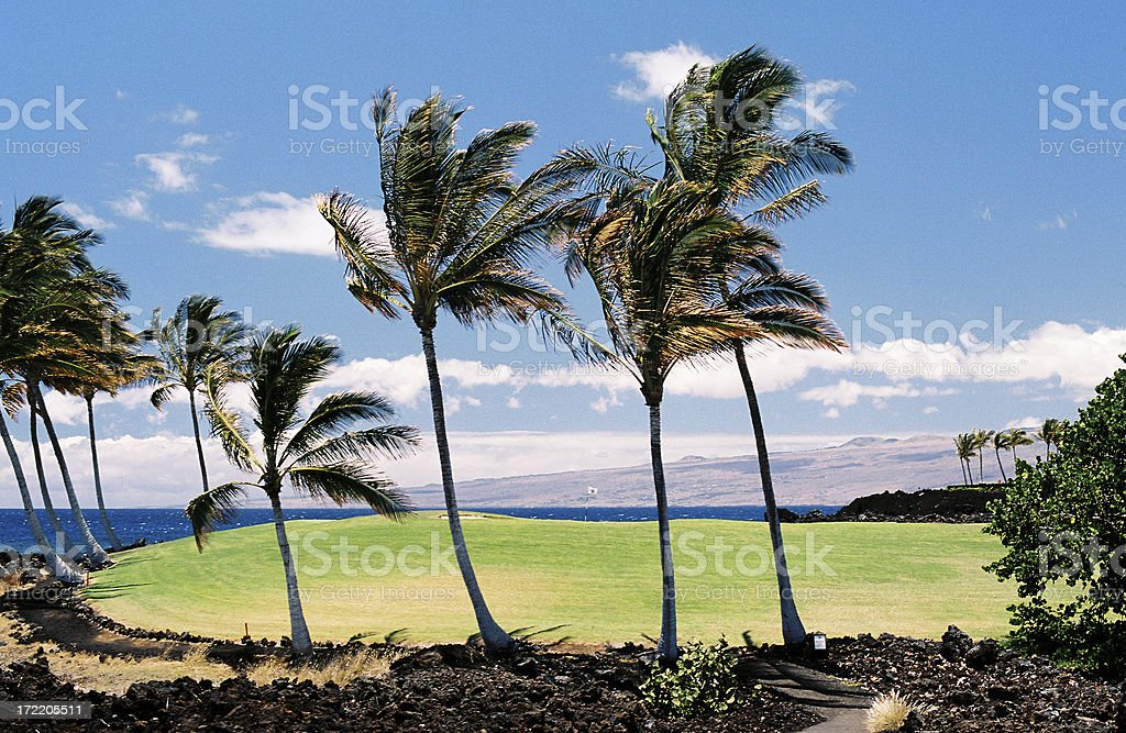 Big Island Hawaii tropical golf course green and hole royalty-free stock photo