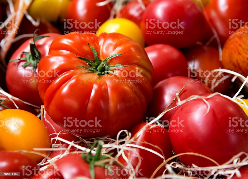 Big juicy looking red tomatoes Lizenzfreies stock-foto