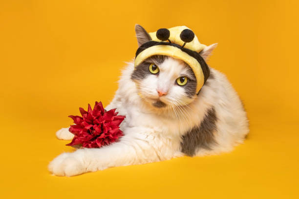 Big Kitty in Bumble Bee Hat With Flower A cute cat in a bumblebee hat with a flower on a yellow background. sdominick stock pictures, royalty-free photos & images