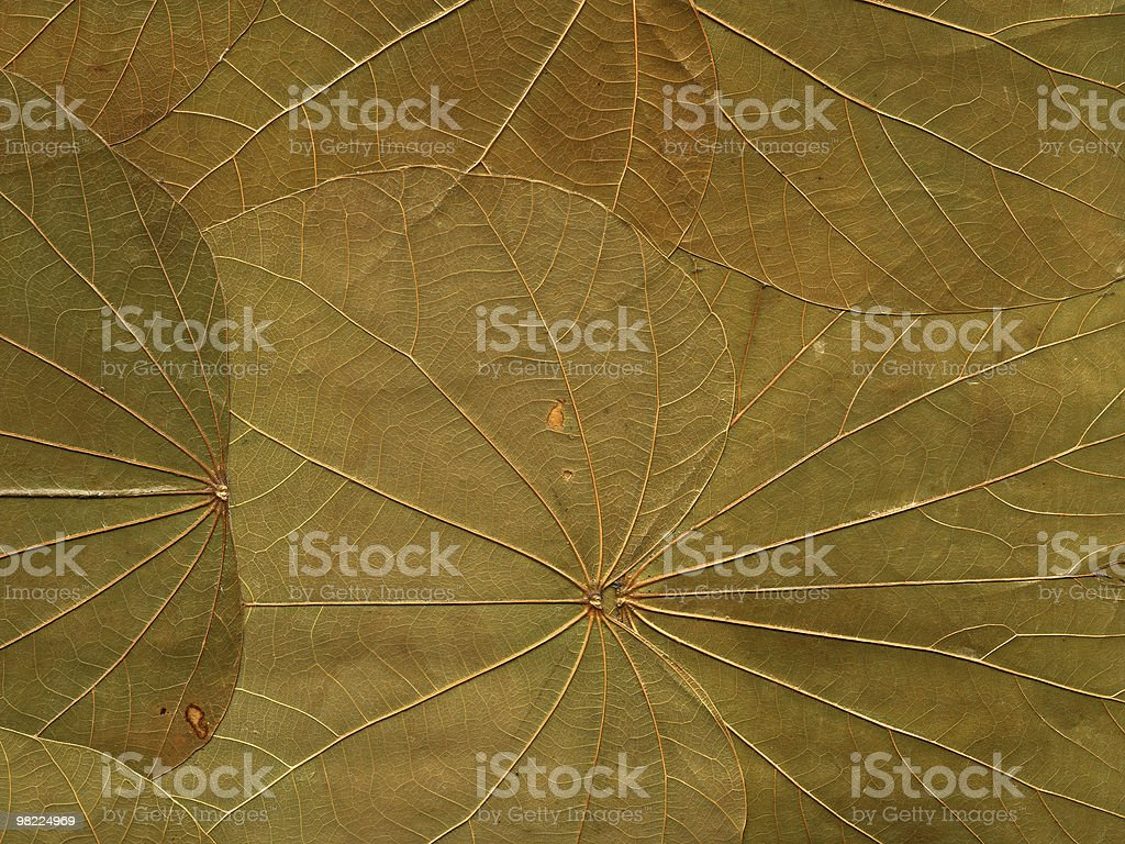 Big Leaves royalty-free stock photo
