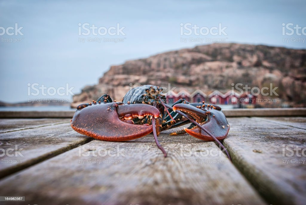 Big lobster on a wooden jetty. stock photo