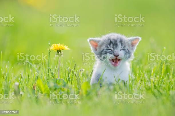 Big meow picture id826557526?b=1&k=6&m=826557526&s=612x612&h=x2hkhss82k3ornka28yze4cugfzoj84vs0hlahvms0s=