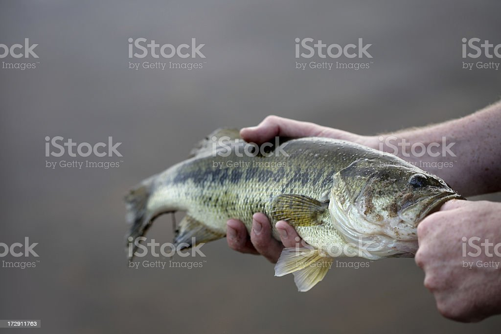 Big mouth royalty-free stock photo