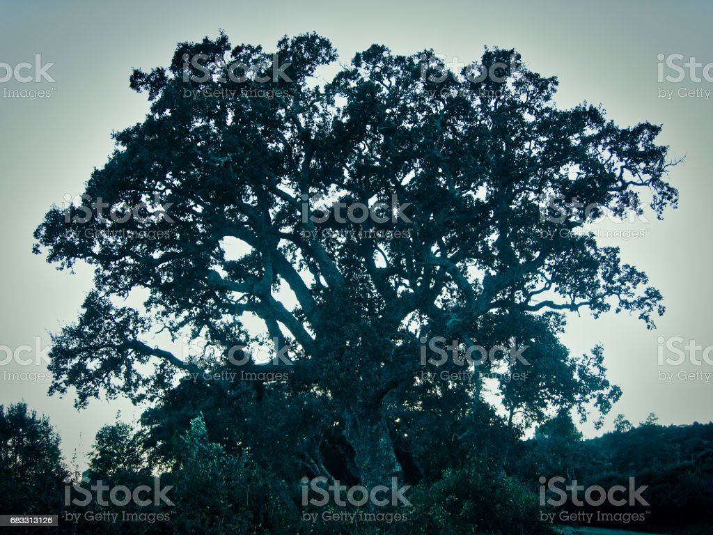 Big Mysterious Tree royalty free stockfoto